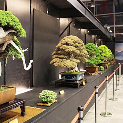 4-bonsai