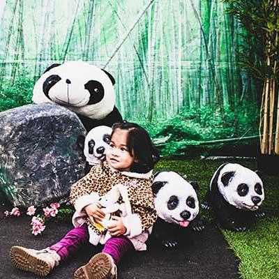 area-panda