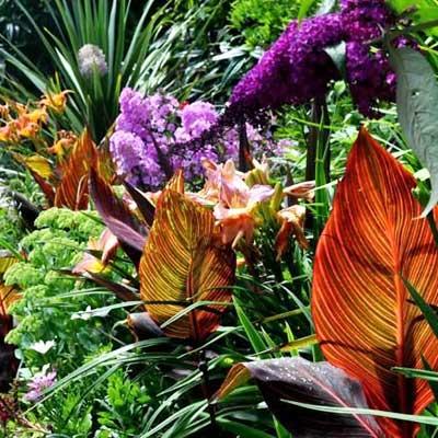 giardino-tropicale-quad